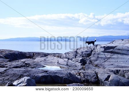 Image Of A Pacific Northwest Landscape, With A Small Black And White Dog In The Distance.