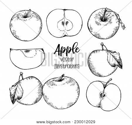 Hand Drawn Vector Illustrations - Organic Apples In Sketch Style. Perfect For Packing, Labels, Print