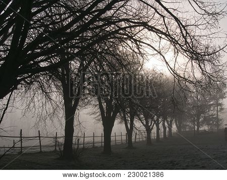 Row Of Trees At Sunrise On A Foggy Morning
