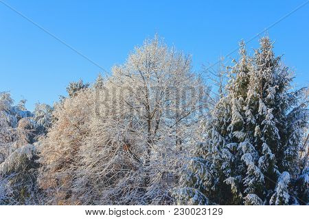 A White Winter Landscape  /view Of Snow Covered Trees