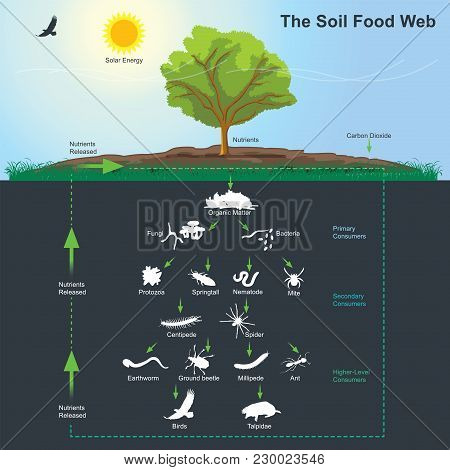 The Soil Food Web Is The Community Of Organisms Living All Or Part Of Their Lives In The Soil. It De