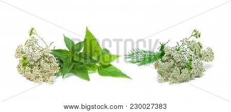 Yarrow And Nettle On White Background. Horizontal Photo.
