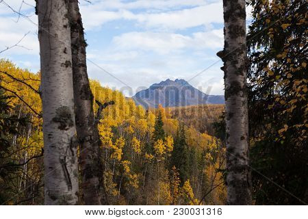 A Beautiful Sunny Day In Alaska With A Mountain Peak Viewed Between Two Aspen. The Fall Colors Are P