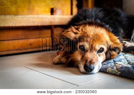 Closeup Of Small Mongrel Dog Head