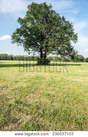 Isolated Tree On Meadow With Forest On The Background And Blue Sky Near Odra River In Poodri In Czec
