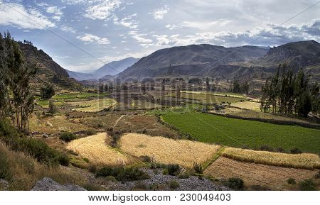 View Of Terraced Fields In The Colca Canyon In Southern Peru, Arequipa Departement