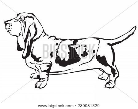 Decorative Contour Portrait Of Standing In Profile  Basset Hound, Vector Isolated Illustration In Bl