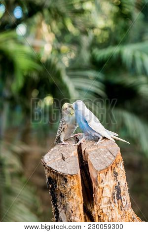 Lovely Bird, Animal And Pet In The Garden