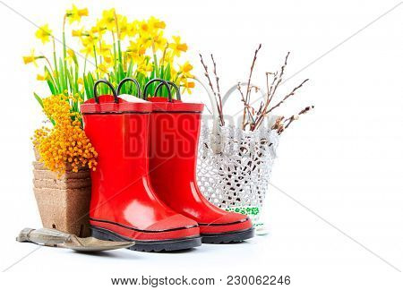 Spring gardening flower narcissus still life with red boots and garden tools, isolated on white background.