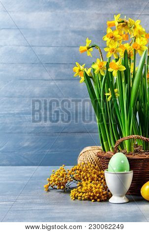 Easter holiday card with eggs yellow spring flower narcissus in wicker basket with copyspace on blue wooden board and branch mimosa.