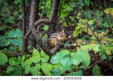 The Picture Of Chipmunk Sitting On A Tree Brunch.