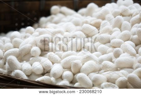 Silkworm Nets For Background, A Source Of Silk Thread And Silk Fabric