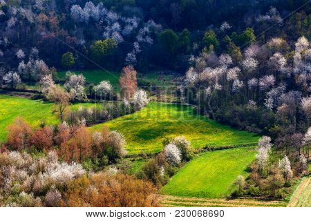 View from above on green meadow with yellow flowers among trees in spring in Piedmont, Northern Italy.