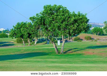 Carob Tree (ceratonia Siliqua) And Golf Field, Paphos, Cyprus