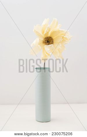 Single Faded Coral Charme Crepe Paper Peony In A Vase On White  Wooden Background