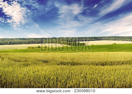 Toned photo wheat field and beautiful blue sky in vintage style