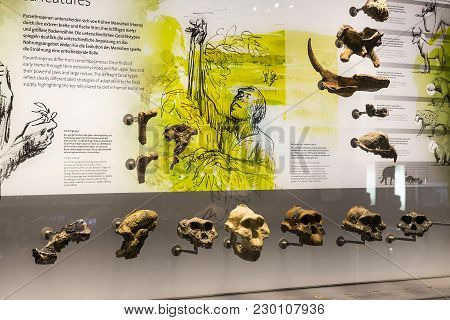 23 August 2017, Vienna, Austria: Exhibits And Expositions In The Museum Of Natural History, Vienna.