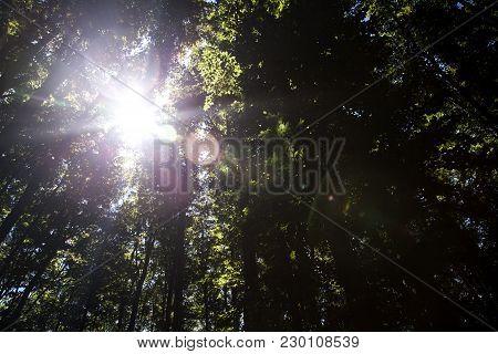 Beautiful Green Forest A Beautiful Green Forest A