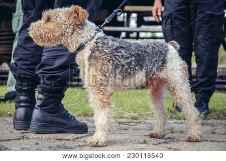 Warsaw, Poland - September 2, 2008: Police Dog Training Session For Illegal Drugs Detection In Warsa