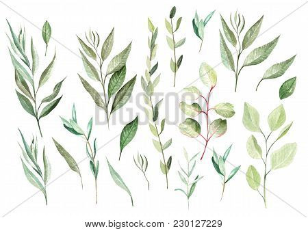 Watercolor Eucalyptus Set. Hand Painted Eucalyptus Elements. Floral Illustration  Isolated On White