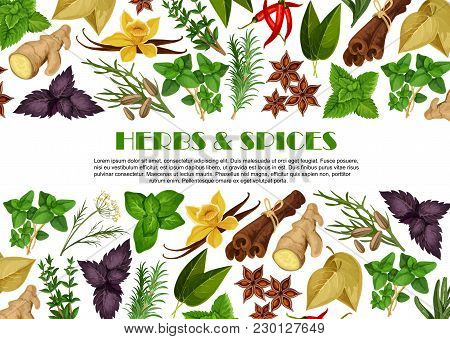 Herbs And Spices Poster Template For Farm Store Or Organic Herbal Products Market. Vector Flat Desig