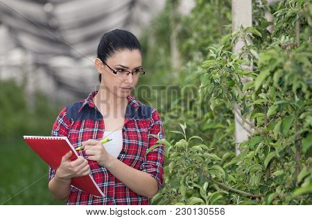 Woman In Apple Orchard In Spring