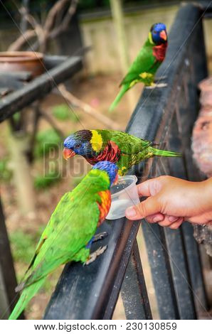 Blurred And Selective Focus Image, Cropped Hand Feeding Rainbow Lorikeet Bird. Blur Background