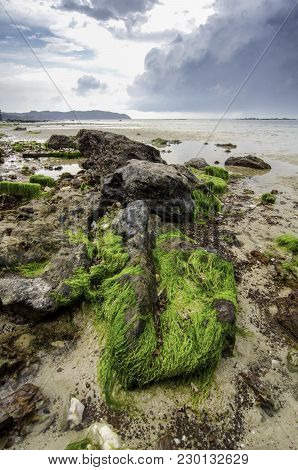 Beauty Algae On The Brown Rock At The Shore. Dramatic And Soft Dark Clouds During Low Tide Water