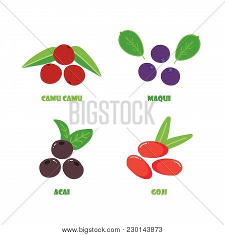 Set, Collection Of Vector Berry Superfood. Camu Camu, Maqui, Acai And Goji Berries Isolated On White