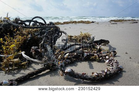 Rope With Barnacles That Washed Up And Was Left Behind When The Tide Went Out.