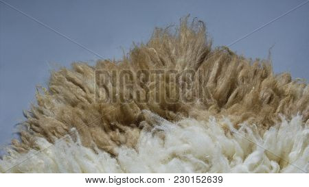 Sheep Fur Of Eid Aladha On Grey Background