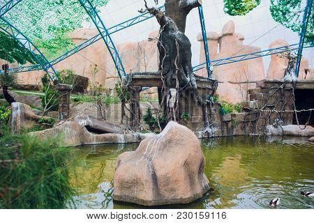 Cranes Cranes, Drontal Cranes, Hokkaido Cranes Animal