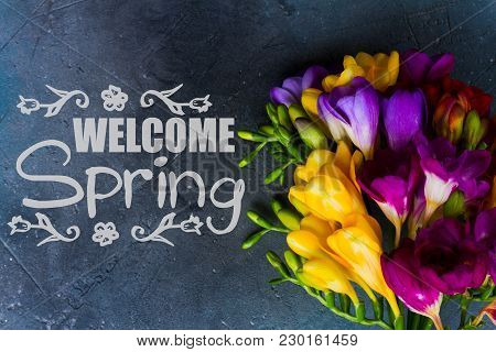 Posy Of Fresh Freesia Flowers Close Up On Gray Stone Background With Welcome Spring Slogan