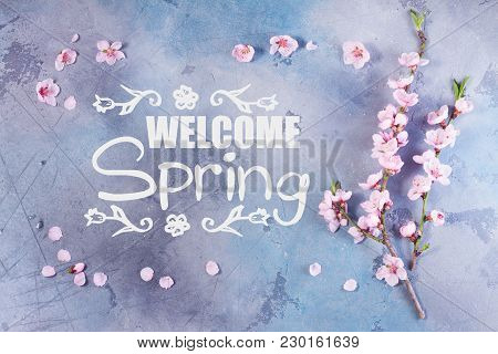 Pink Cherry Blossom Frame On Gray And Blue Background With Welcome Spring Slogan
