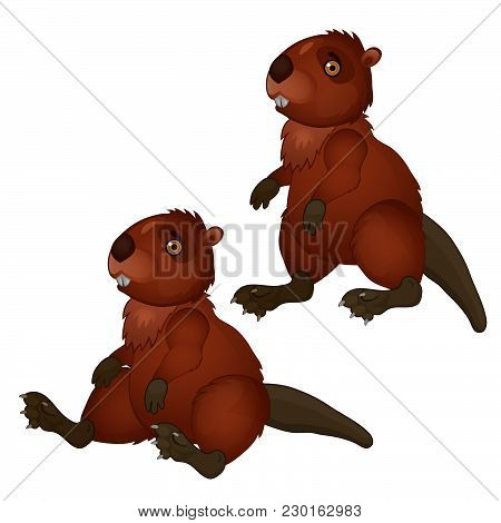Two Brown Beaver Isolated On White Background. Vector Cartoon Close-up Illustration.