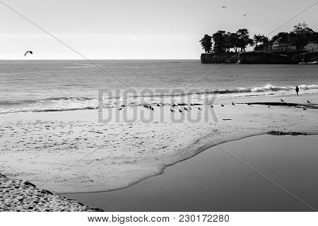 Lone Man And Seagulls On The Beach In Santa Cruz, California, Usa