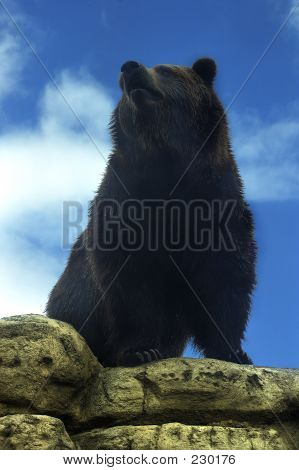 Tierische Bear Grizzly