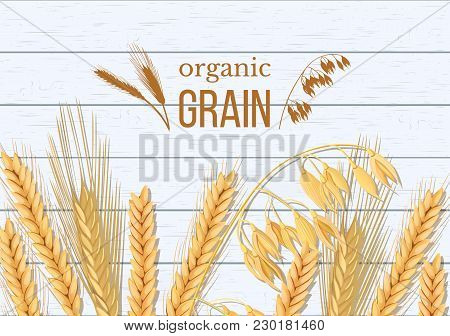 Wheat, Barley, Oat And Rye On White Wooden Background. Cereals Spikelets With Ears, Sheaf And Text O