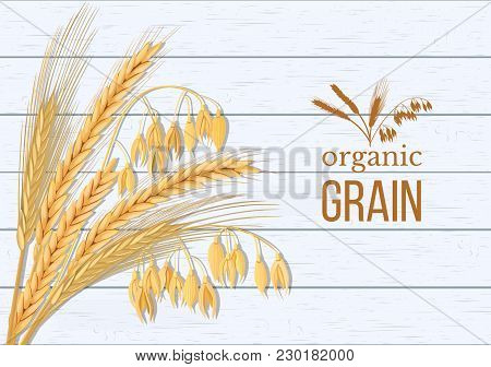 Wheat, Barley, Oat And Rye Set. Four Cereals Spikelets With Ears, Sheaf And Text Premium Foods, Natu