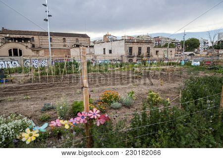 Urban Orchard Grove In City Barcelona. Spain.
