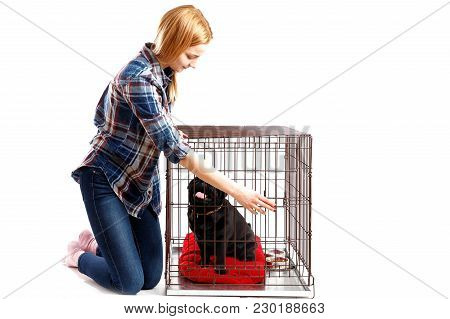 Dog In Crate Cage. Young Woman Opens Door Of Happy Dog, Takes Shelter Out Of Cage.