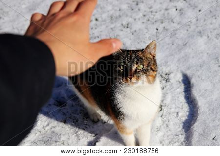 A Colored Kitten Looking My Hand, Waiting On Ground And What Will Be Happen
