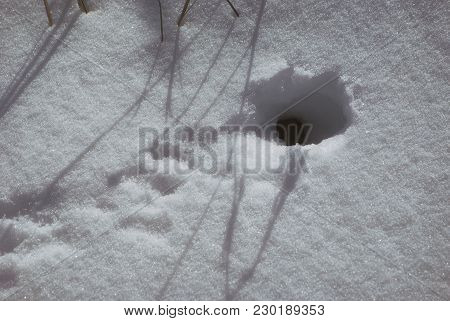 Mouse Hole In Winter With Snow With Traces In Front Of The Entrance.