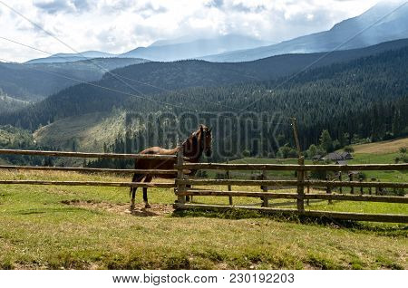 A House Horse Is Behind A Fence. Horse In The Mountains. The Horse Is In The Center Of The Frame.