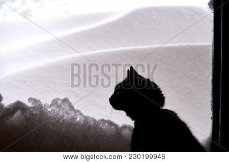 Black Cat Looking At Freshly Fallen Snow.