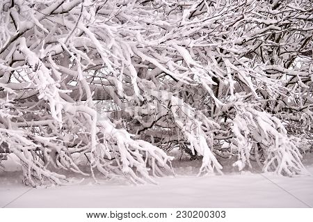 Magical Winter Cold Background Scene With Trees Covered In Snow.