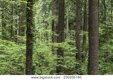 Forest Trunks Woods Environment Wildlife  Green Nature