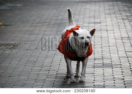 A Dog Wandering In The Street Of Kowloon City, Hong Kong