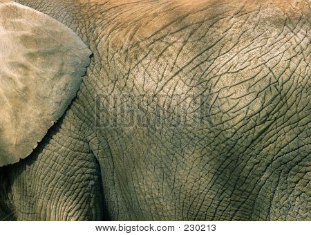 Tier Elefant Textur