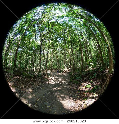 Trail The Rainforest With Lush Green Trees, Shot With A Fisheye Lens For A Circular Effect